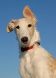 Be less like the Borg. Be more like the Borzoi.